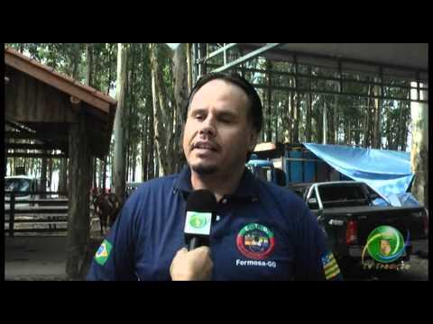 Festival Nacional 2011  »  Entrevista  »  Sandro Lamb - FTC - PC