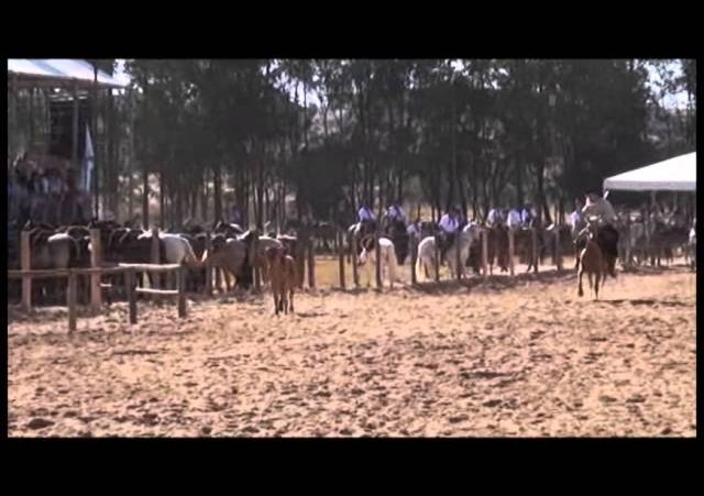 16º Rodeio Nacional - Laço Autoridade