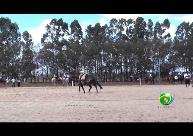 16º Rodeio Nacional de Campeões - Prova de Rédeas Cronômetro - Prenda Mirim
