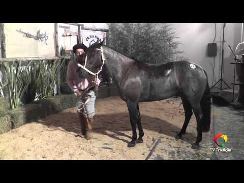 Rodeio Conesul 2014 - 9º Leilão Laço Certeiro - lote 22