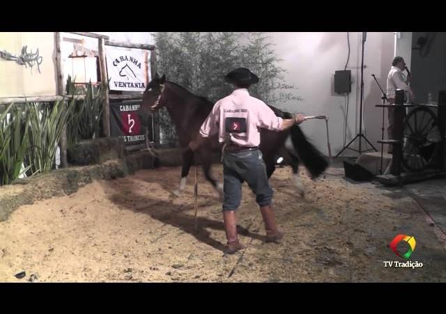 Rodeio Conesul 2014 -  9º Leilão Laço Certeiro - lote 31
