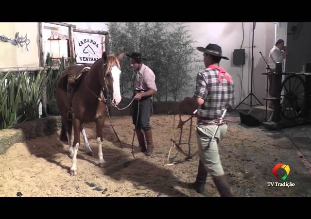 Rodeio Conesul 2014 -  9º Leilão Laço Certeiro - lote 36