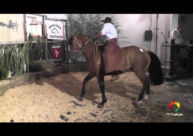 Rodeio Conesul 2014 -  9º Leilão Laço Certeiro - lote 33