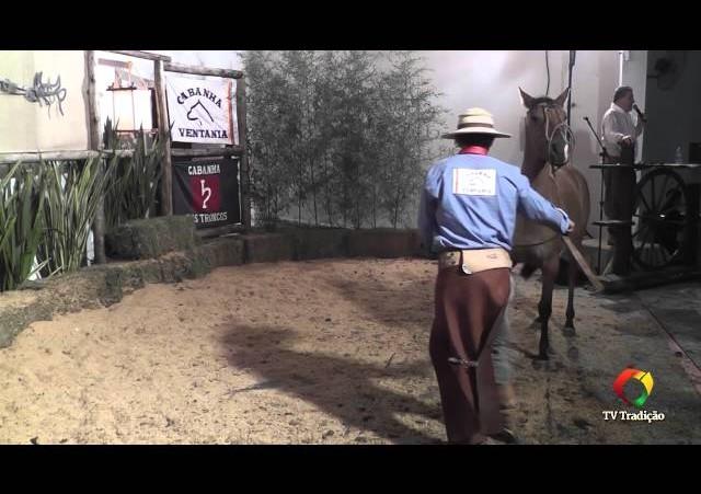 Rodeio Conesul 2014 -  9º Leilão Laço Certeiro - lote 11