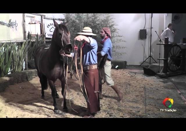 Rodeio Conesul 2014 -  9º Leilão Laço Certeiro - lote 07
