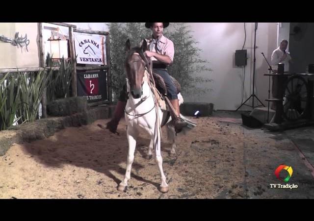 Rodeio Conesul 2014 -  9º Leilão Laço Certeiro - lote 35