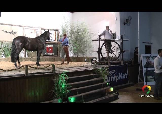 Rodeio Conesul 2014 -  9º Leilão Laço Certeiro - lote 03