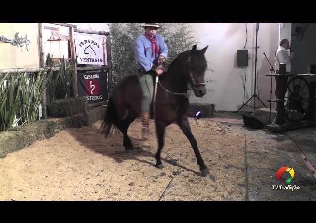 Rodeio Conesul 2014 -  9º Leilão Laço Certeiro - lote 19