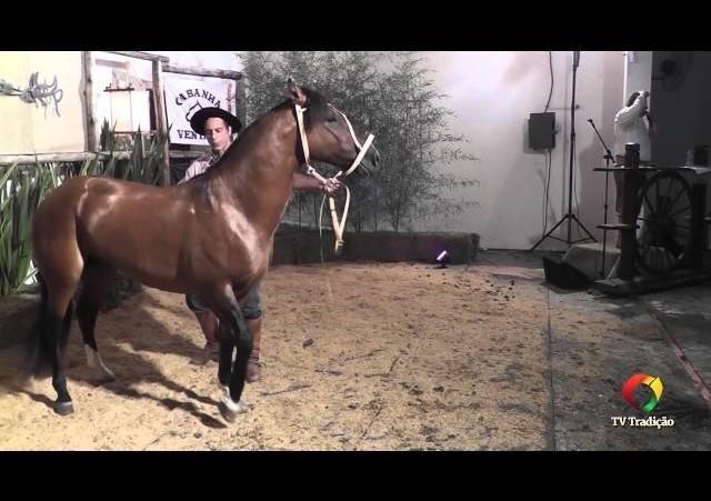 Rodeio Conesul 2014 -  9º Leilão Laço Certeiro - lote 37