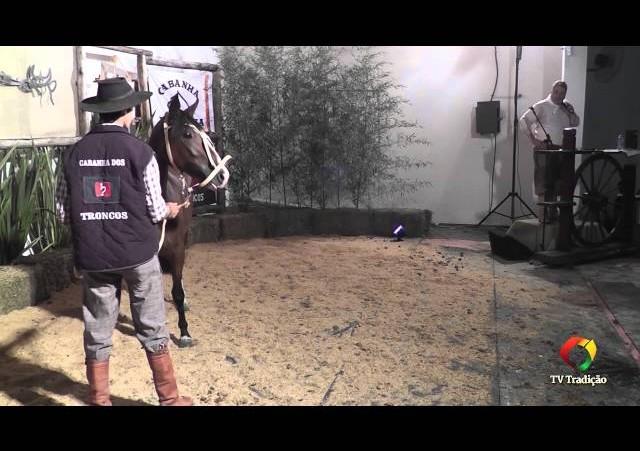 Rodeio Conesul 2014 -  9º Leilão Laço Certeiro - lote 18