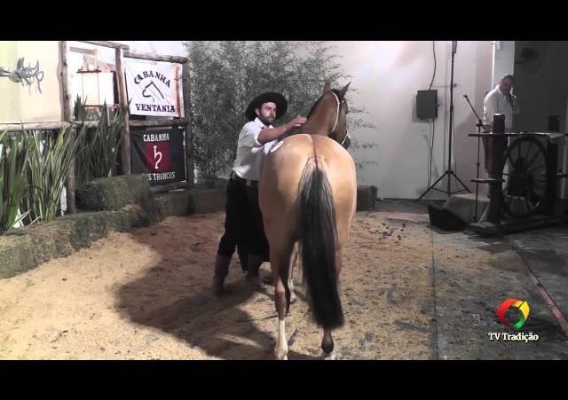Rodeio Conesul 2014 -  9º Leilão Laço Certeiro - lote 01