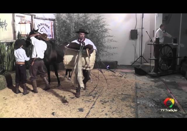 Rodeio Conesul 2014 -  9º Leilão Laço Certeiro - lote 28