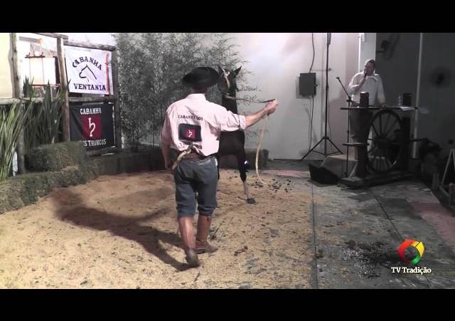 Rodeio Conesul 2014 -  9º Leilão Laço Certeiro - lote 06