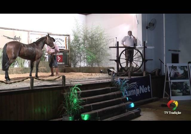 Rodeio Conesul 2014 -  9º Leilão Laço Certeiro - lote 10