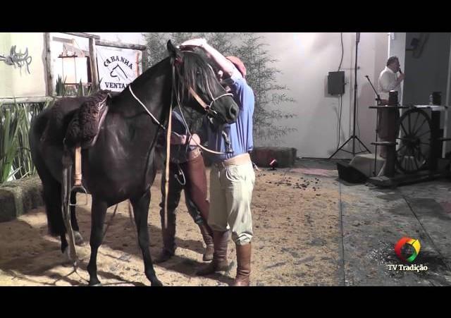 Rodeio Conesul 2014 -  9º Leilão Laço Certeiro - lote 23