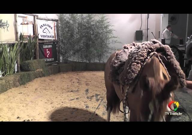 Rodeio Conesul 2014 -  9º Leilão Laço Certeiro - lote 09