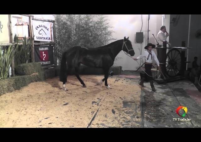 Rodeio Conesul 2014 - 9º Leilão Laço Certeiro - lote 24