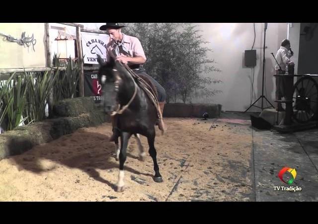 Rodeio Conesul 2014 - 9º Leilão Laço Certeiro - lote 02