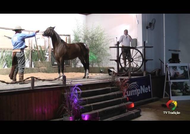 Rodeio Conesul 2014 - 9º Leilão Laço Certeiro - lote 15