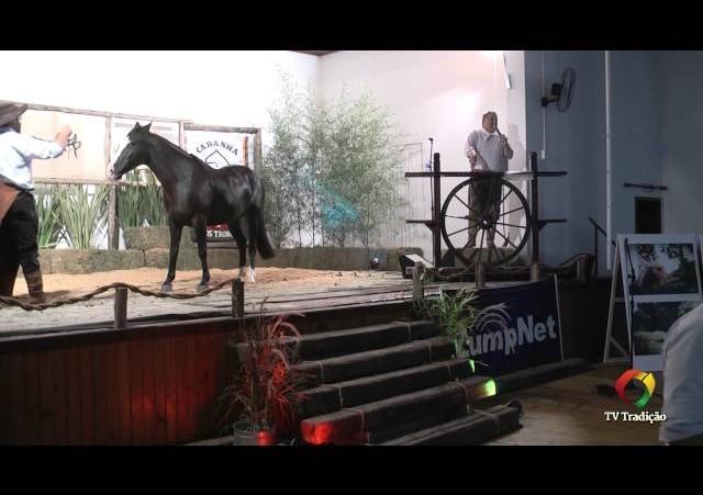 Rodeio Conesul 2014 - 9º Leilão Laço Certeiro - lote 13