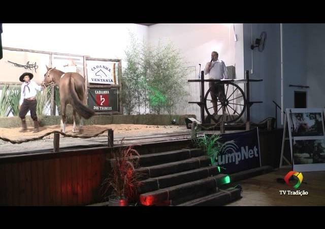 Rodeio Conesul 2014 - 9º Leilão Laço Certeiro - lote 16