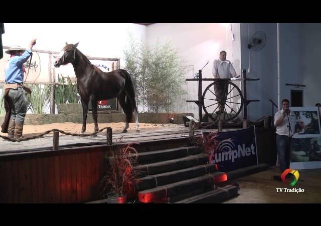 Rodeio Conesul 2014 - 9º Leilão Laço Certeiro - lote 26