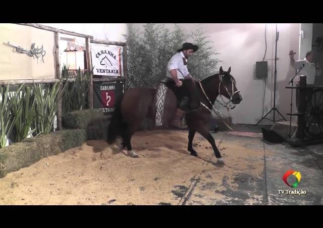 Rodeio Conesul 2014 - 9º Leilão Laço Certeiro - lote 25